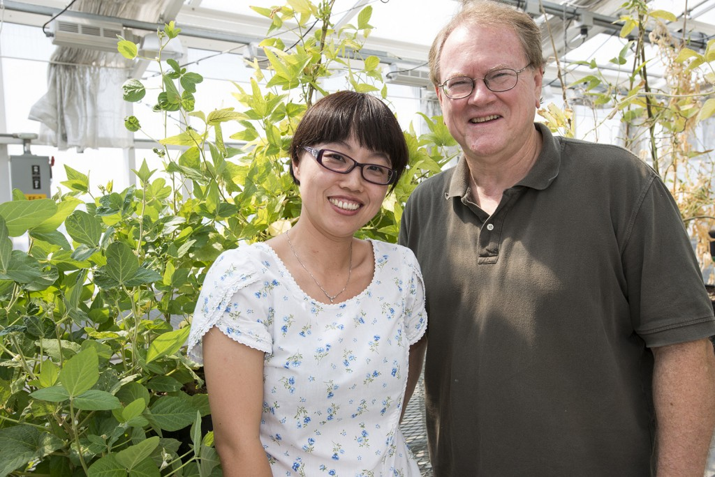 Yan Liang, an MU post doc, and Gary Stacey, a Bond Life Sciences investigator, stand in front of soybean plants from their greenhouse. The researchers focus on understanding the symbiotic relationship between legumes like soybean and nitrogen-fixing bacteria.