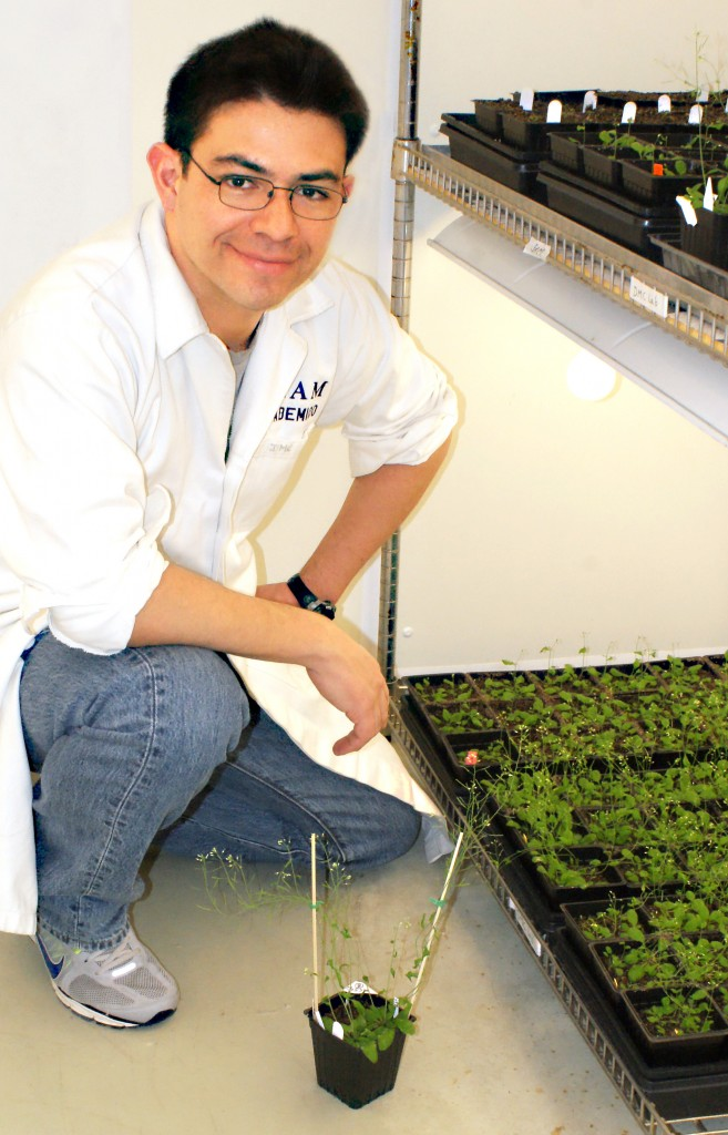 David Mendoza-Cozatl uses Arabidopsis plants like these as a model to understand how plants transport nutrients from soil to seeds and leaves.