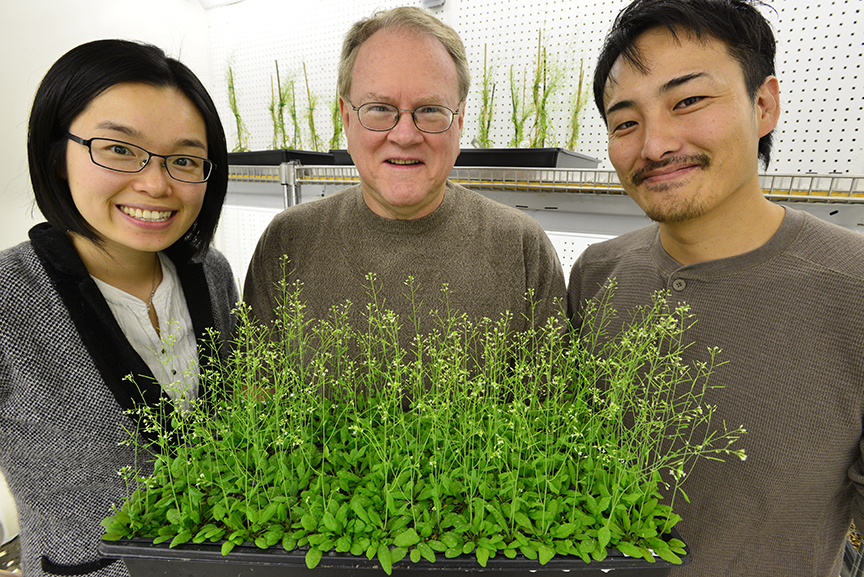 Jeongmin Choi (left), Gary Stacey (center) and postdoc Kiwamu Tanaka recently discovered the first plant receptor for extracellular ATP.
