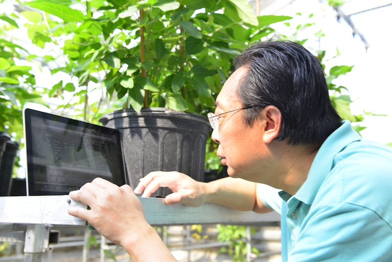 Yaya Cui, an investigator in plant sciences at the Bond Life Sciences Center examines data on fast neuron soybean mutants that are represented on the SoyKB database.