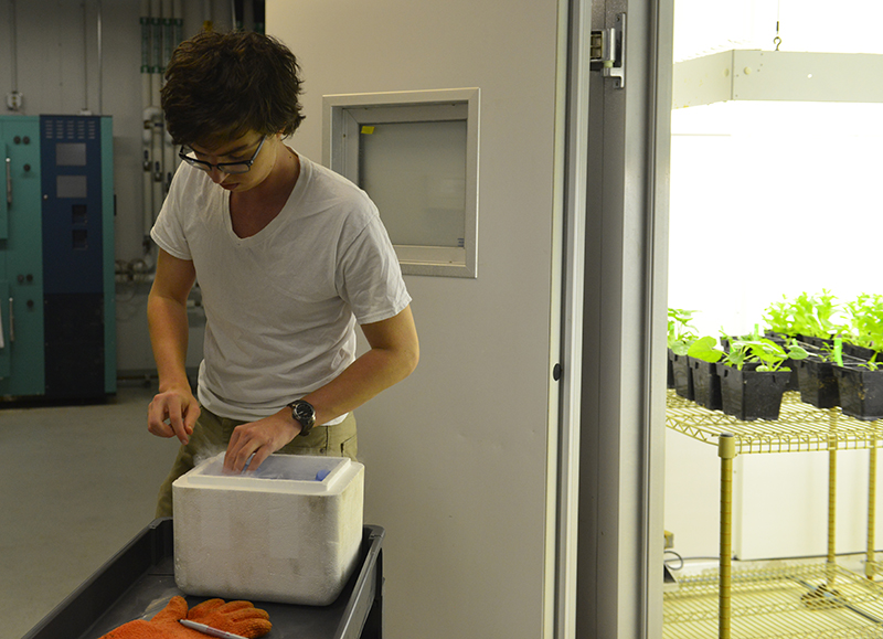 Hannah Baldwin/Bond LSC MU undergraduate Wade Dismukes gathers plants from a growing room in Bond LSC to prepare for an experiment about plant evolution on Thursday, April 9, 2015. Dismukes, who won an arts and sciences scholarship, is a researcher in Dr. Chris Pires' lab. He is a double major in biology and math.