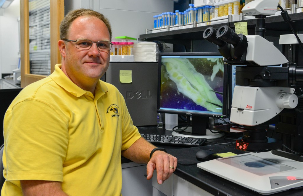 James Amos-Landgraf, assistant professor of comparative medicine and genetics at the University of Missouri, is helping develop a pig model for colon cancer using CRISPR. //photo by CALEB O'BRIEN/Bond LSC